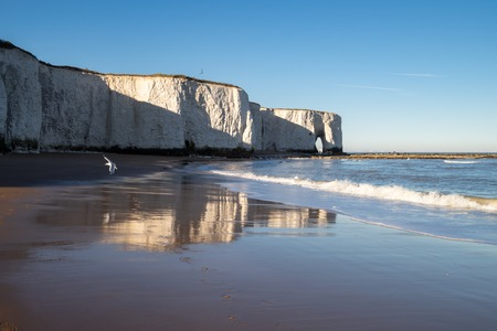 Seagulls flying over the beach and cliffs in Botany Bay, Kent, with reflections of the on the sand