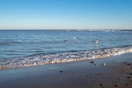 Waves on the shore in the evening sun in Kent, with seagulls flying over the water Stock Photo