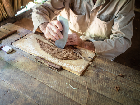 Havana, Cuba - tobacco leaves being rolled into cigars by master craftsman Stock Photo