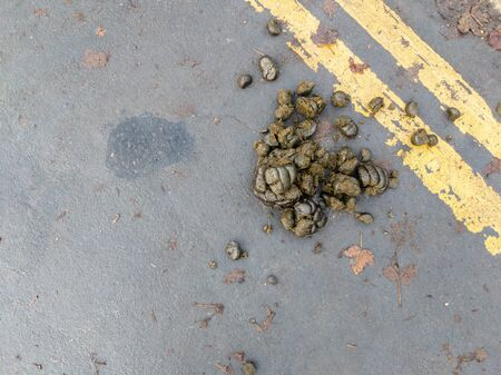 Pile of horse poop in the street with double yellow lines