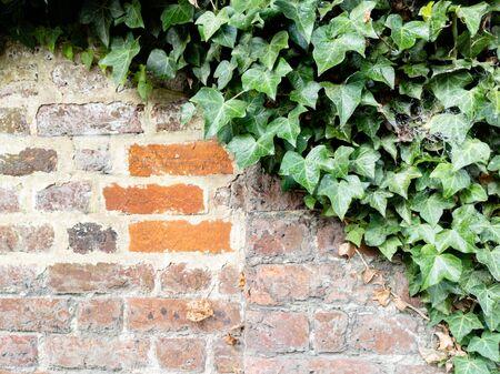 Full frame shot of damaged brick wall with orange bricks and green ivy