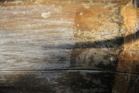 natural textures bamboo photo