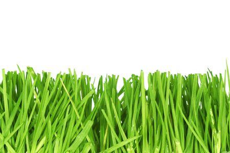 Fresh cut grass photo