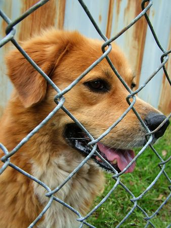 mistreatment: trapped dog Stock Photo