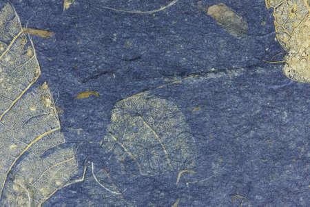 erosion: Grunge leaf texture