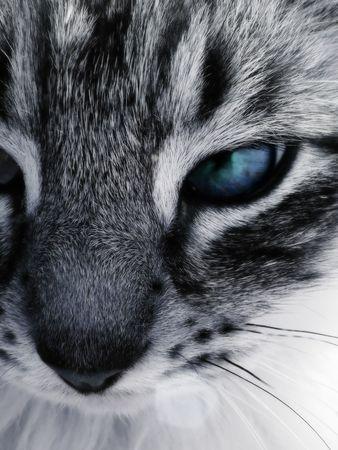beautiful cat staring close-up photo