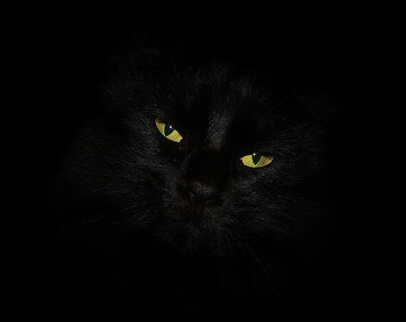 gato negro: Gato negro con ojos amarillos  Foto de archivo