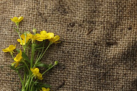 Pretty yellow flowers on burlap photo
