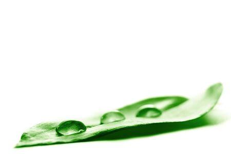 rejuvenate: Water drop on a leaf Stock Photo