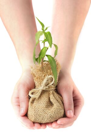 Hands holding young plant Stock Photo - 2940165