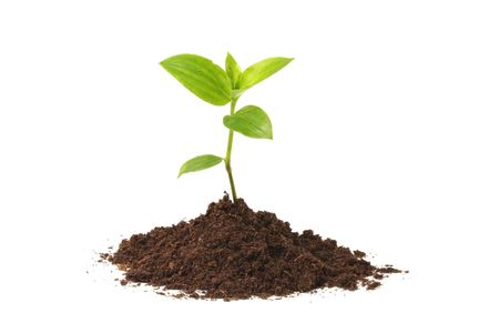 Young plant Stock Photo - 3097341
