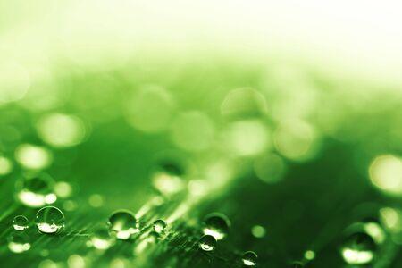 shallow dof: Water drops - shallow dof Stock Photo
