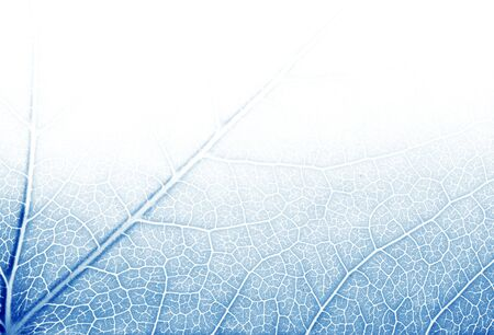 Leaf texture in blue tones photo