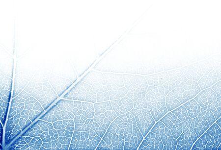 Texture feuille dans les tons de bleus  Banque d'images - 3097353