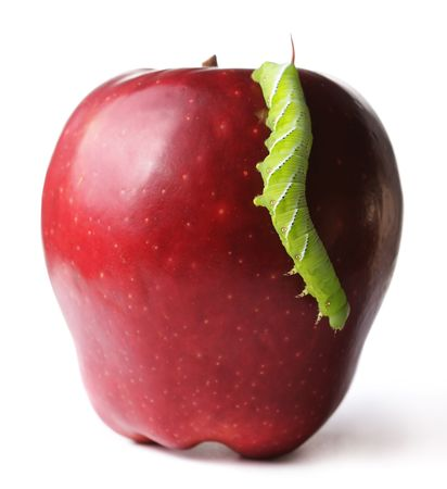 critter: Caterpillar on apple