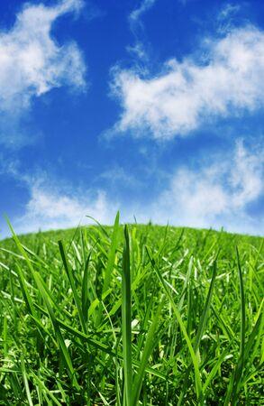 Green grass & blue skys Stock Photo - 3574709