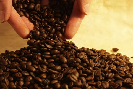 Hand holding coffee beans Stock Photo - 3574701