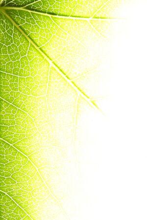Bright leaf closeup Stock Photo - 3591394