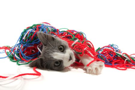 meow: Kitten playing with yarn