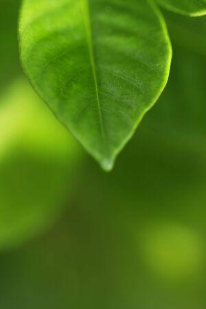 Green leaf Stock Photo - 3591346