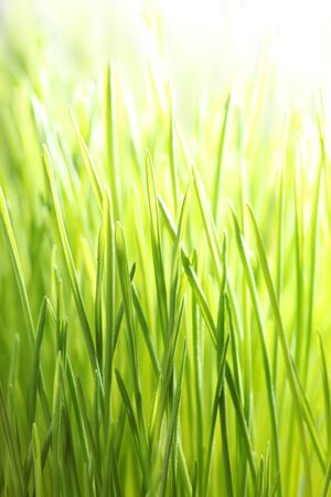 Bright green grass photo