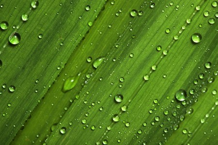 Water drops on leaves photo