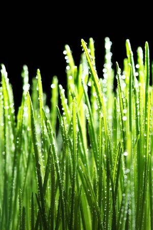 Dew drops on green grass photo