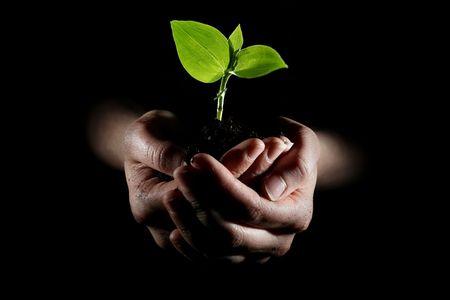 Handen bedrijf jonge plant