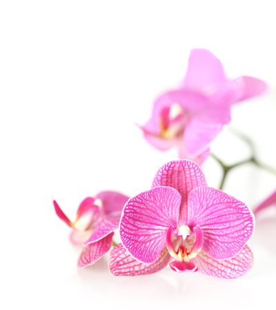 Pink orchid Stock Photo - 4952228