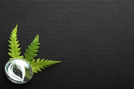 wellness environment: Fern background Stock Photo