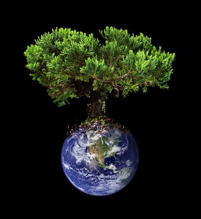 Earth tree Standard-Bild