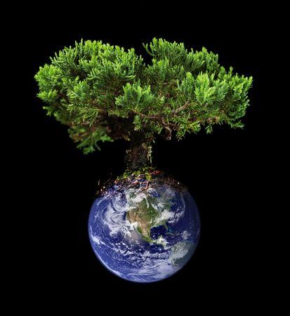 Earth tree Stock Photo