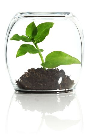 Plant protected in glass Stock Photo - 5299387
