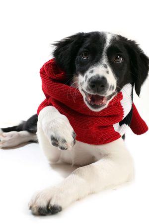 red scarf: image description Stock Photo