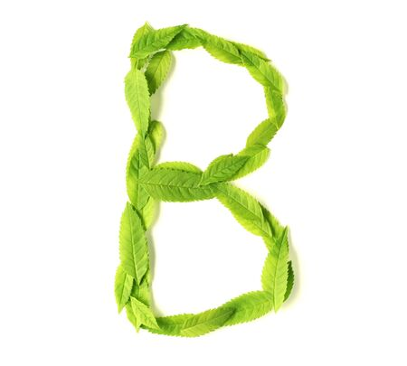 Uppercase letters made of leaves photo