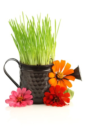 Watering can with grass & flowers isoalted on white photo
