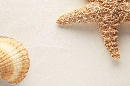 Shell and starfish on sand