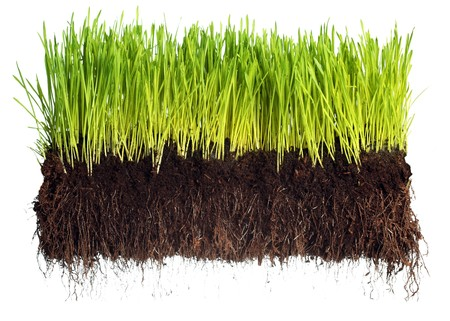 Green grass showing roots Stock Photo - 7447677