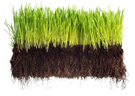 Zielony trawa pokazujÄ…ce korzenie  Zdjęcie Seryjne