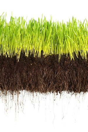 Green grass showing roots photo