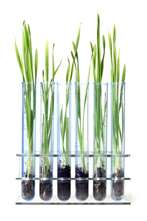 Gras groeit in proefbuizen