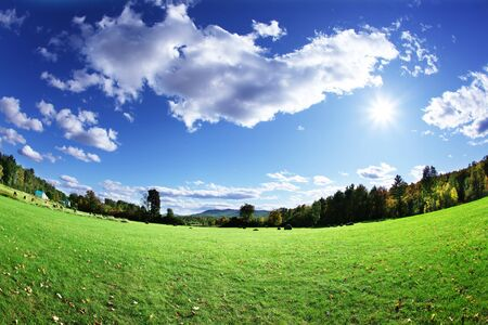 Green pasture and bright blue sky photo