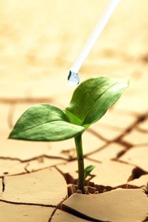 Plant in gedroogde, gescheurde modder die wordt bewaterd