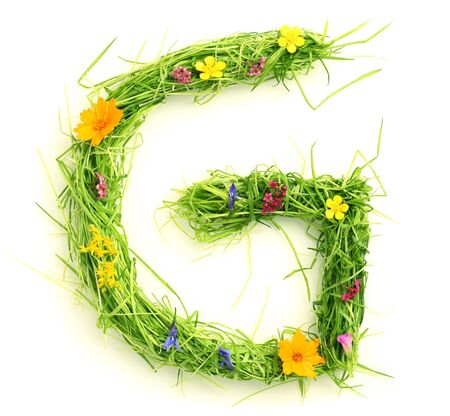 grass font: Letters made of flowers and grass isolated on white Stock Photo