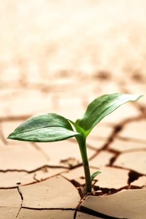 Plant in dried cracked mud Standard-Bild