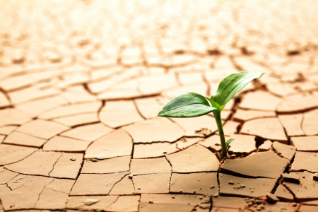 global warming: Plant in dried cracked mud Stock Photo