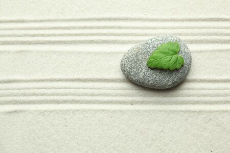 Green leaf on rock in sand photo