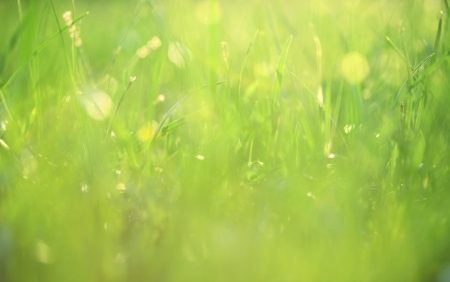 blur: Grass covered in dew background