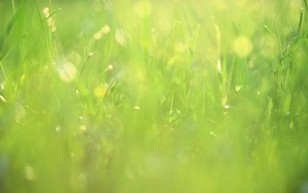 meadow  grass: Hierba cubierta en el fondo de roc�o