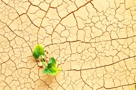 Plant sprouting in the desert photo